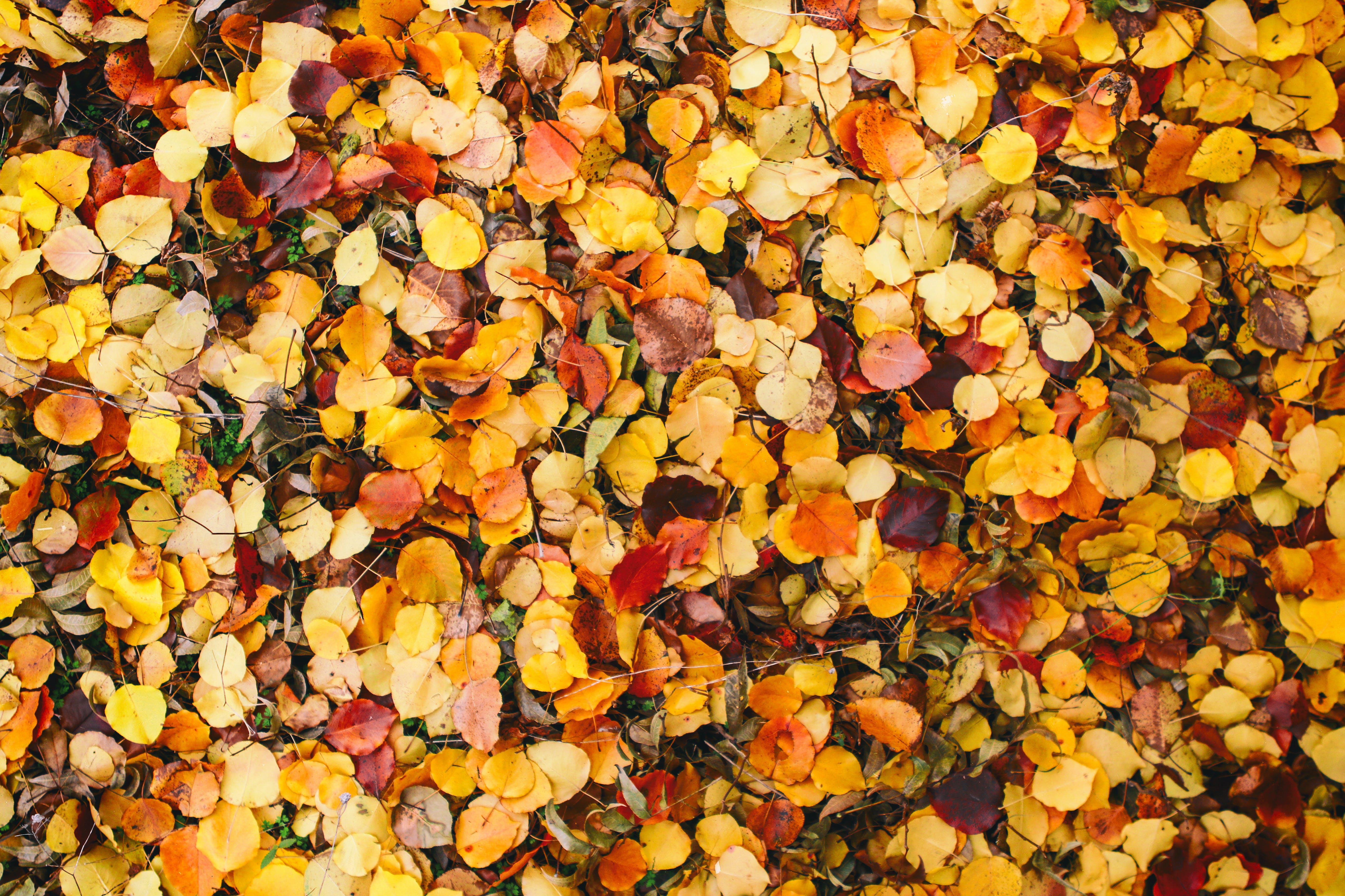 Free stock photo of #autumn, #backyard, #bokeh, #botanicalgarden