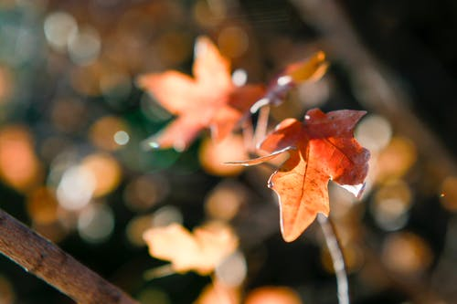 Free stock photo of autumn, backyard, bokeh