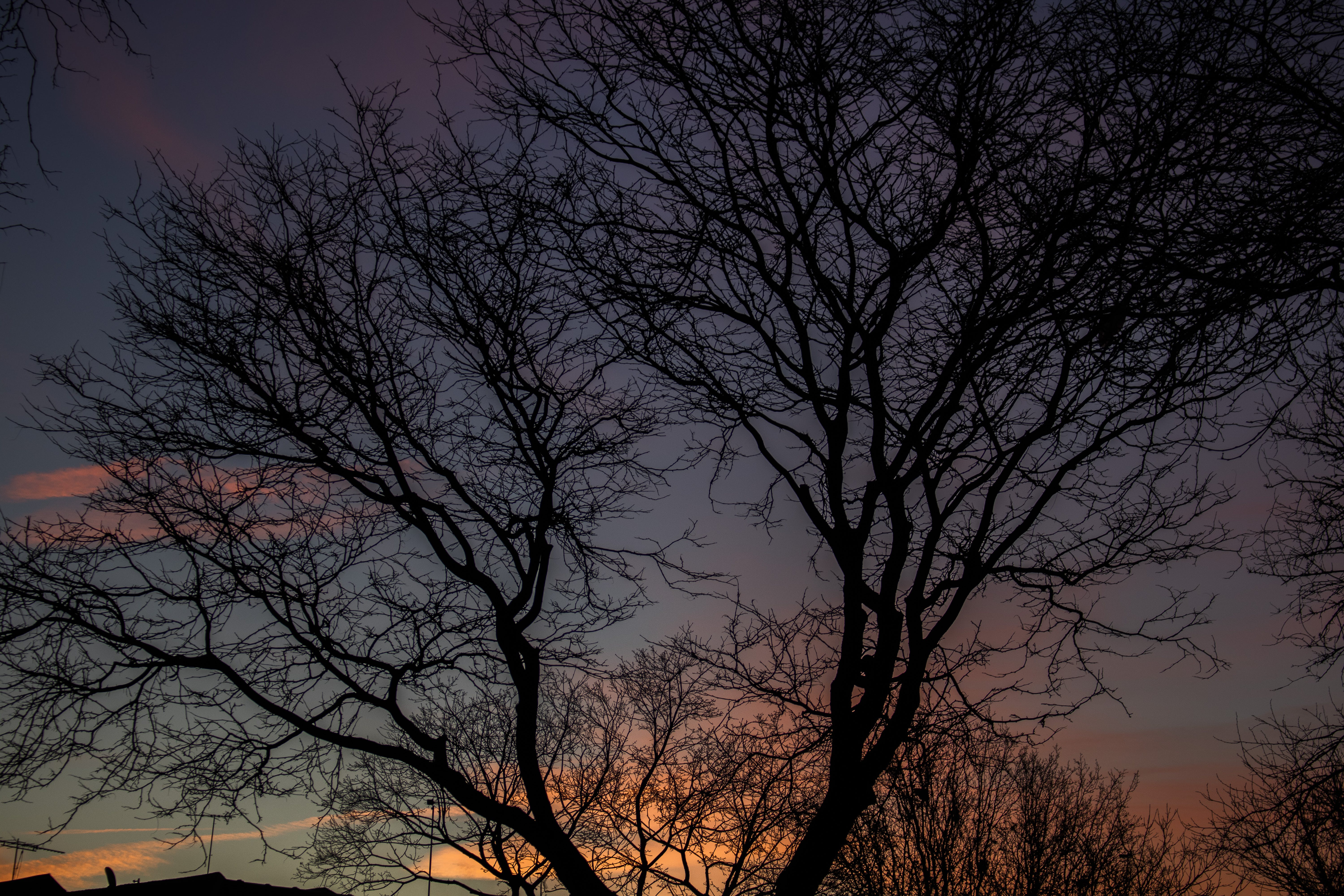 Silhouette Photo Of Bare Tree