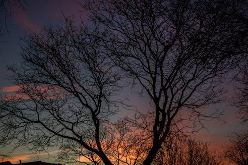 Foto d'estoc gratuïta de alba, arbre, branques, capvespre