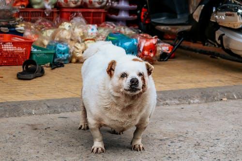 Kostenloses Stock Foto zu haustier, hund, hündisch, niedlich