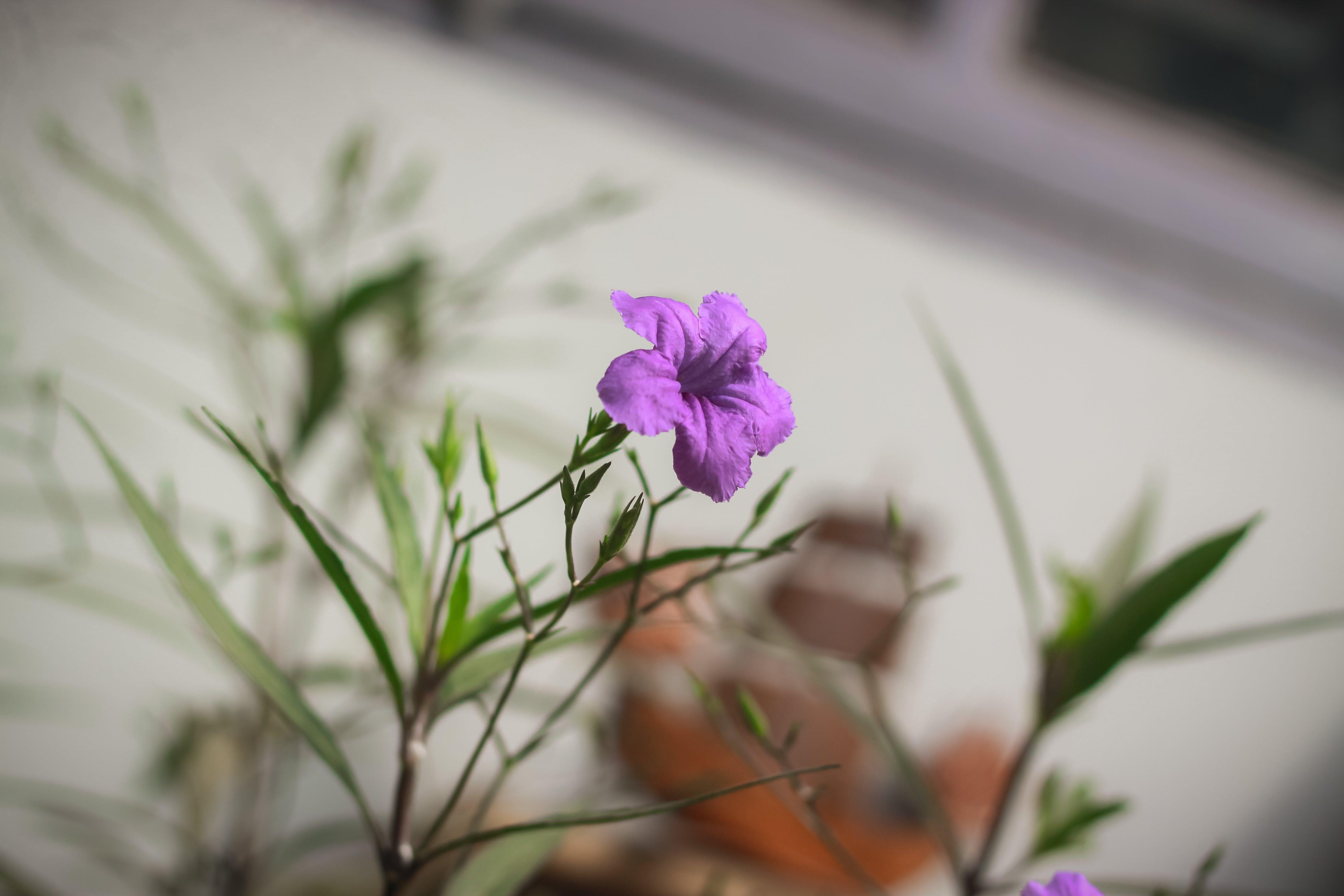 Free stock photo of alone, beautiful flowers, flower, green
