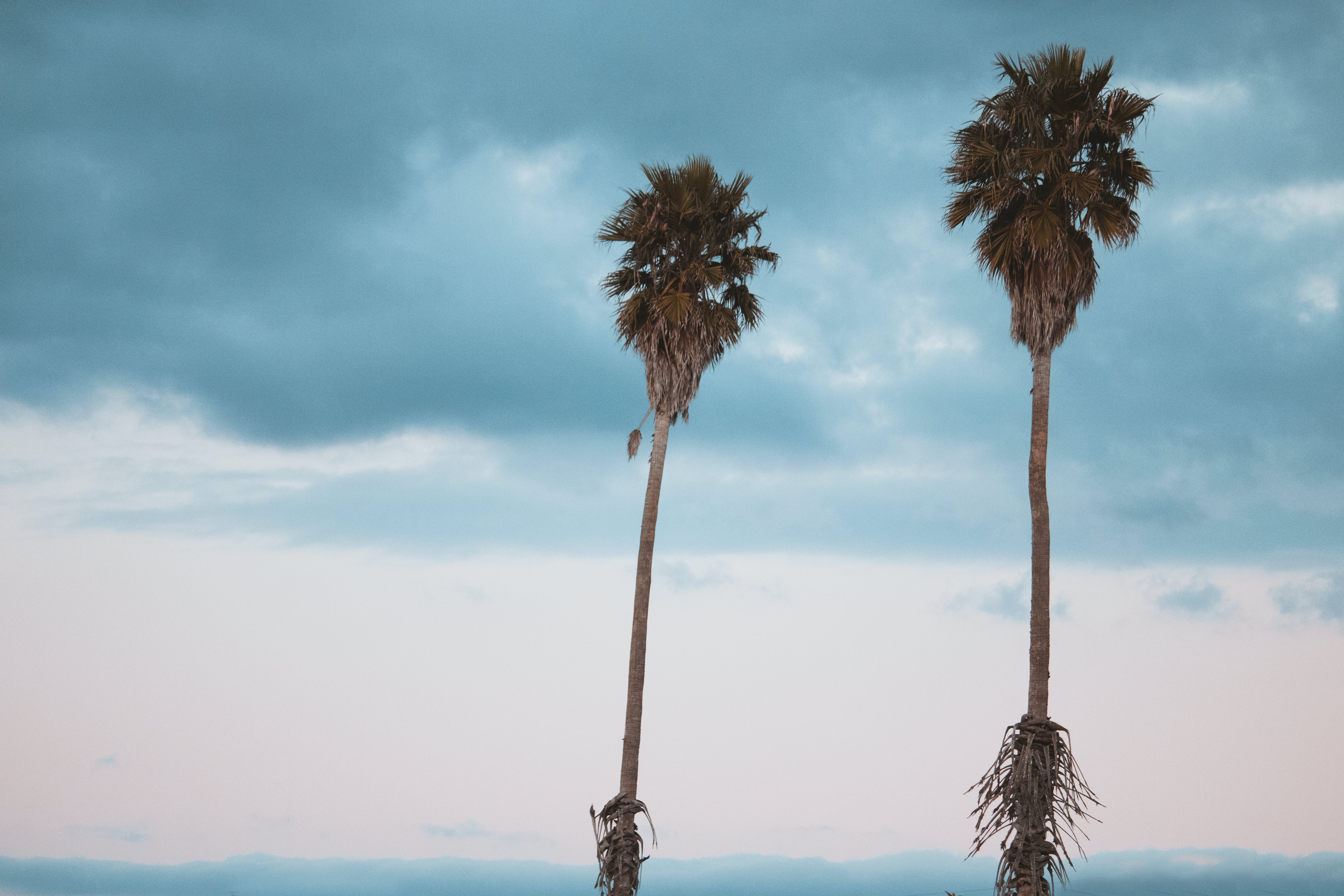 Two Green-leafed Palm Trees