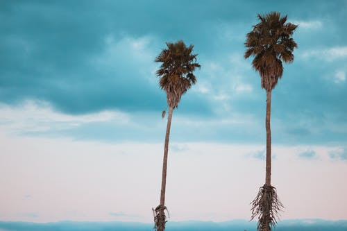 Foto stok gratis alam, awan, condong, dua