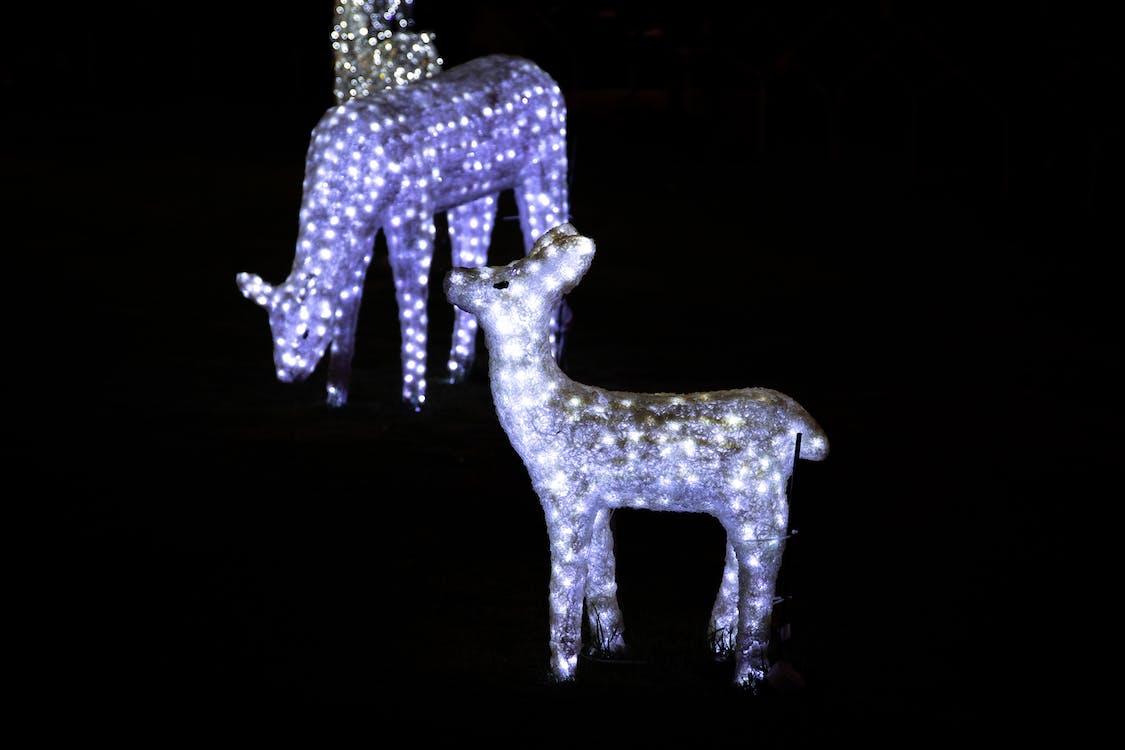 Free stock photo of chistmas decorations, christmas, christmas lights