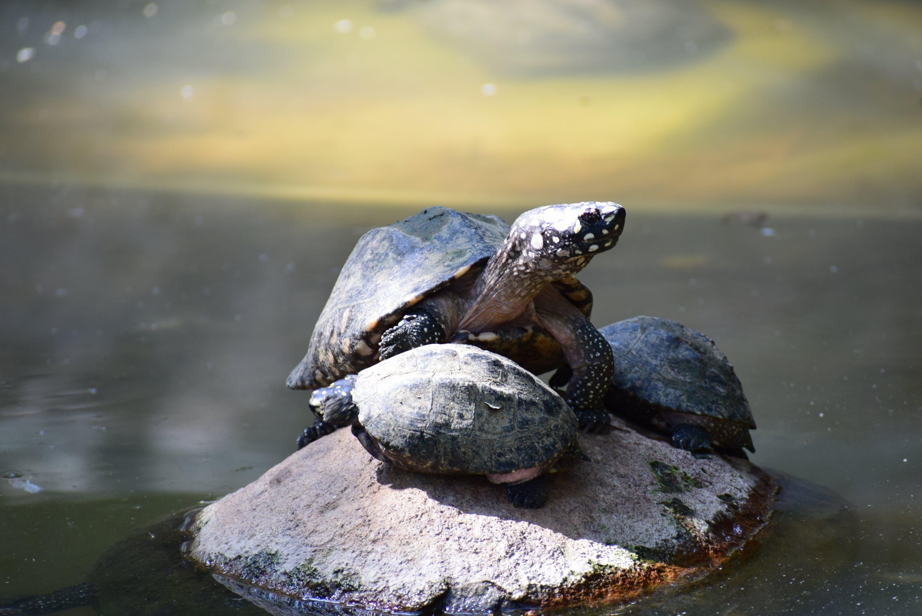 Darmowe zdjęcie z galerii z dzika przyroda, kamień, mokry, morze