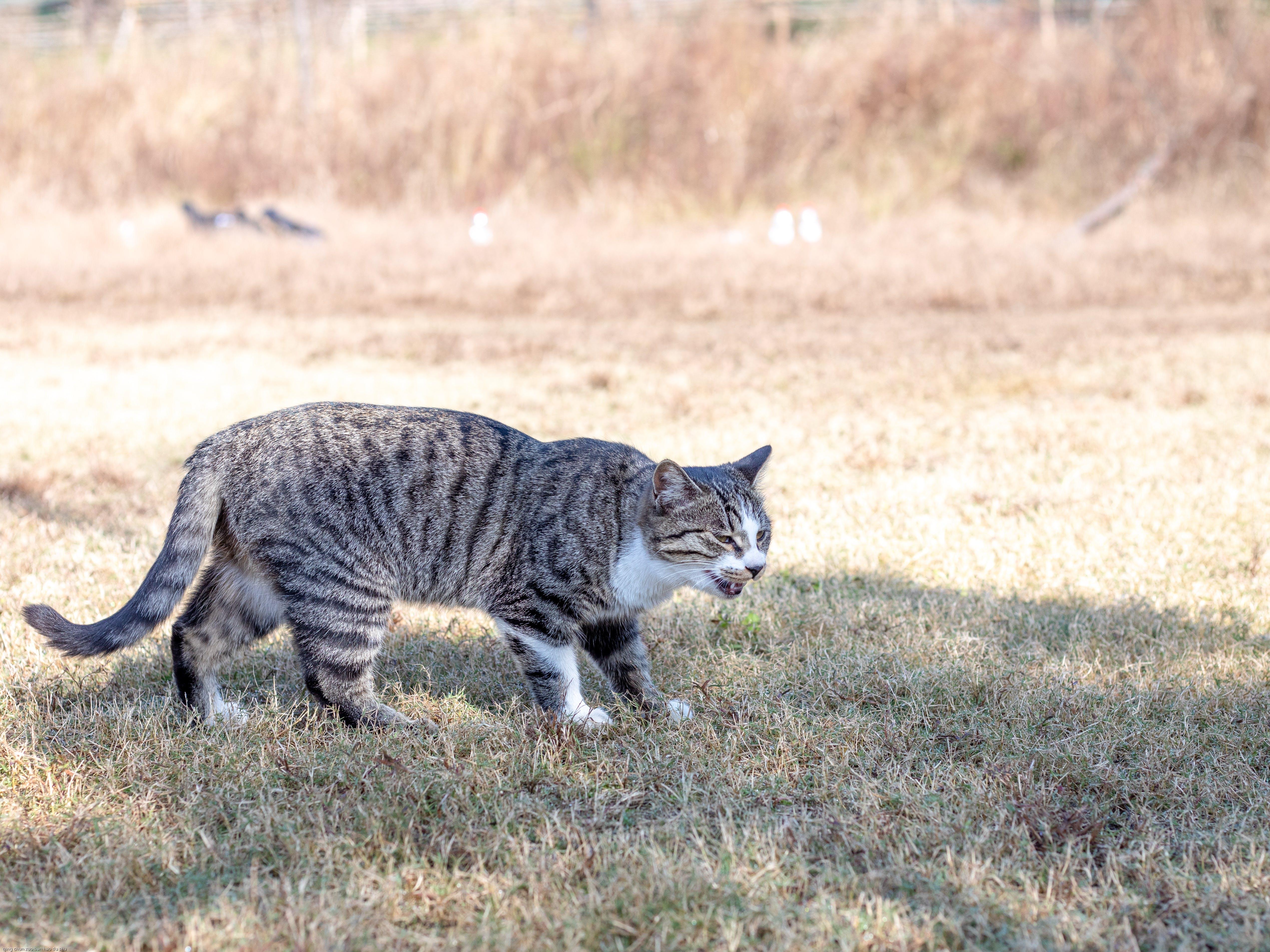 Free stock photo of animal, cat, funny, mammal