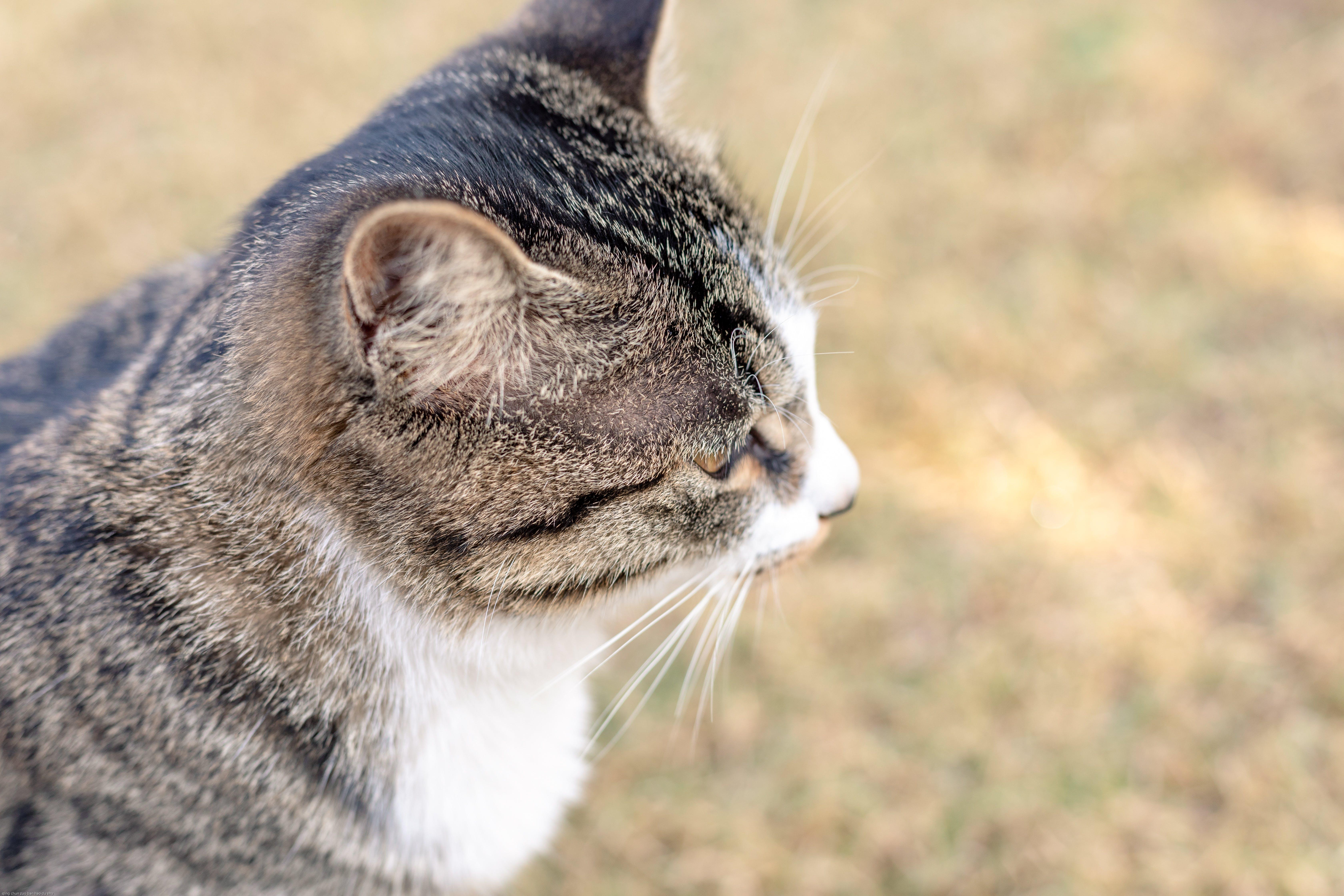 Free stock photo of animal, cat, eye, mammal