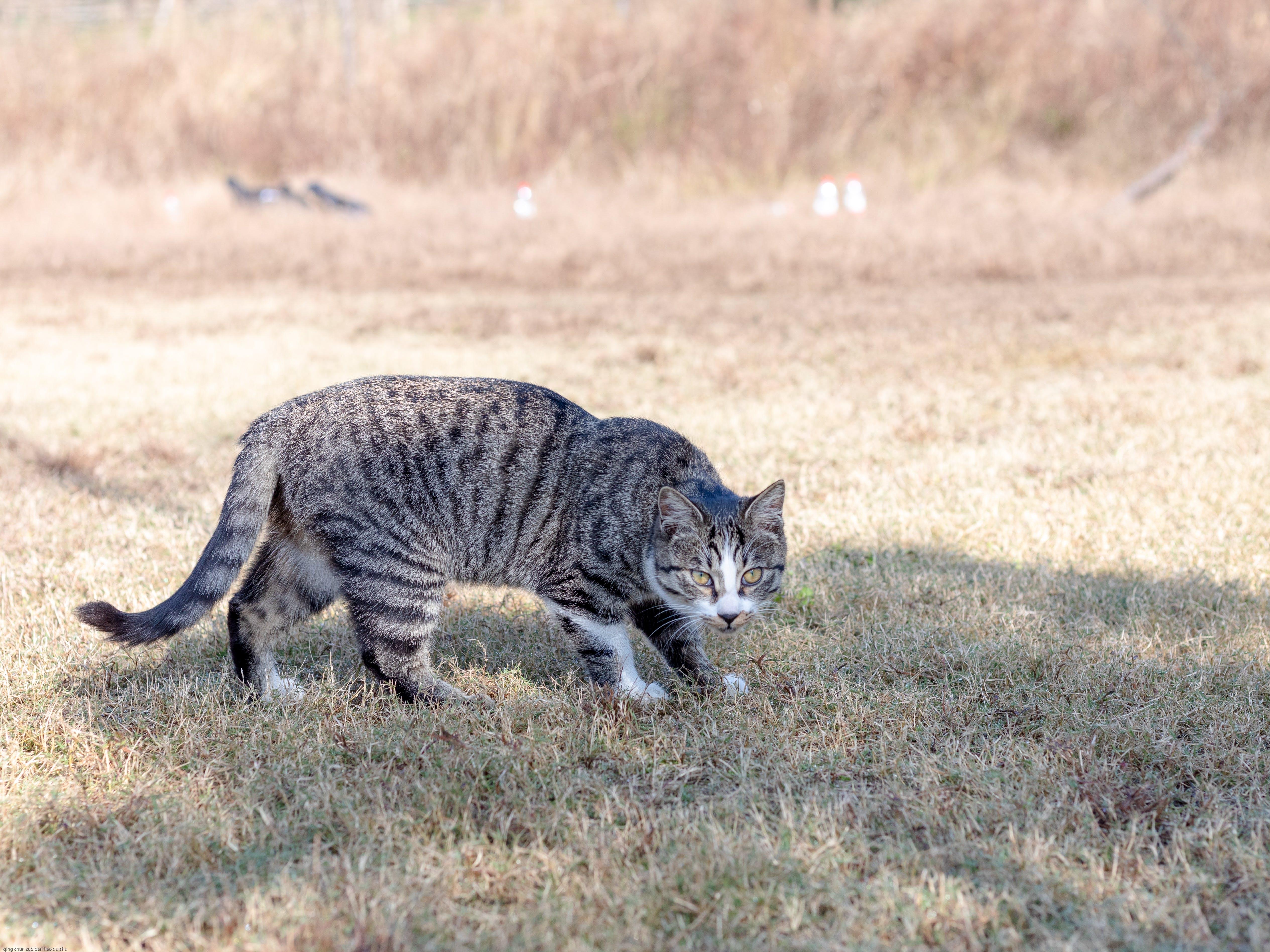 Free stock photo of animal, cat, eye, funny