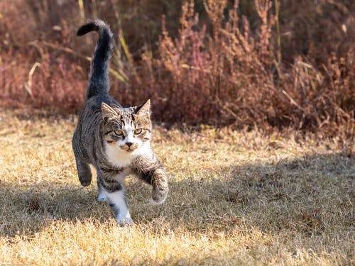 Free stock photo of animal, cat, funny