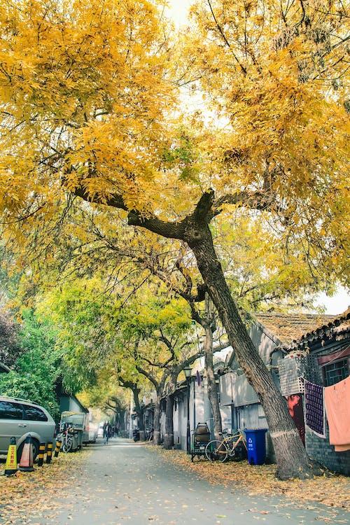 Ingyenes stockfotó 北 锣鼓 巷, 北京, 房屋, 植物 témában