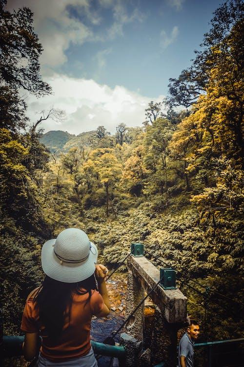 Photos gratuites de adulte, arbres, aventure, environnement