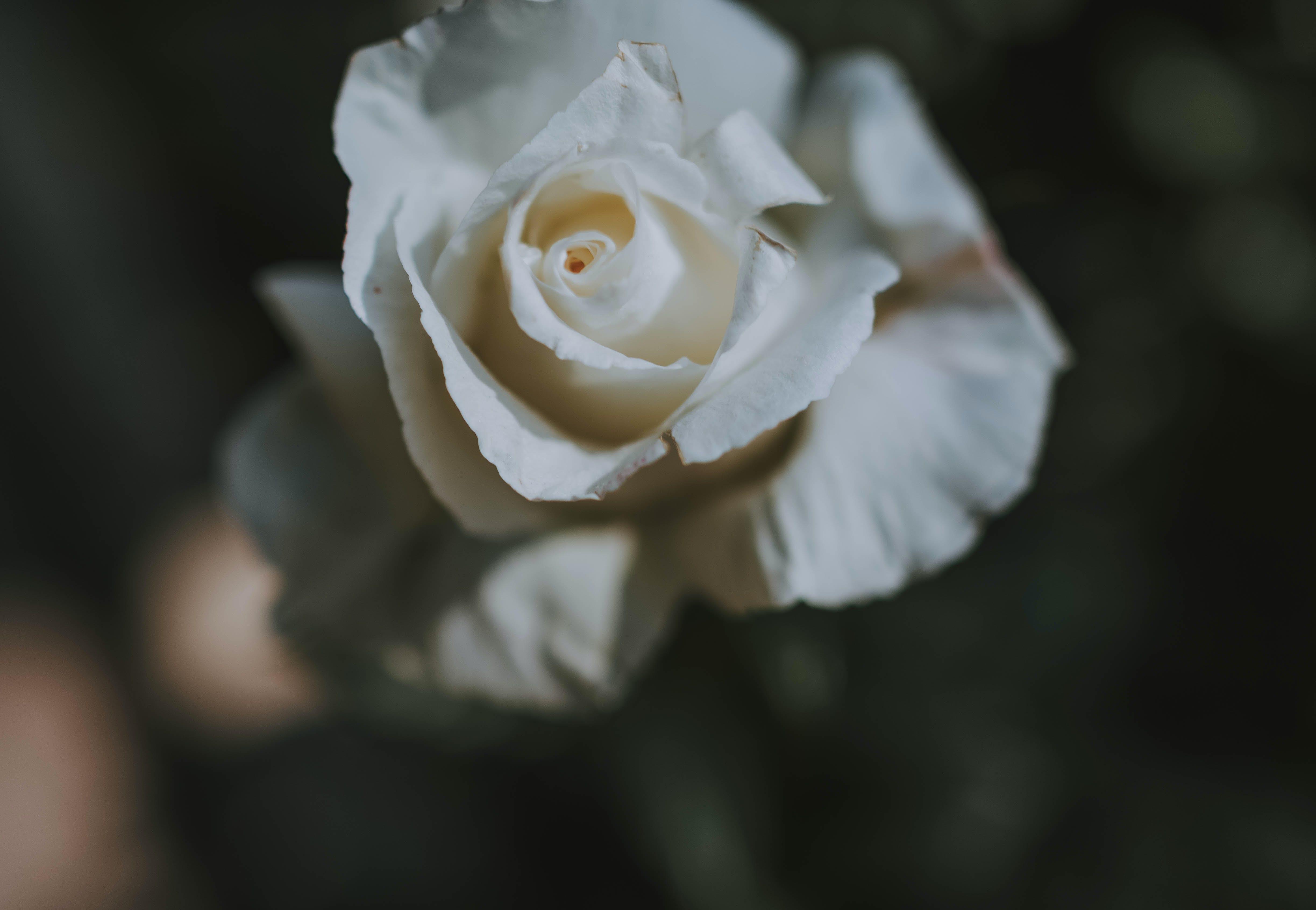 Δωρεάν στοκ φωτογραφιών με εργοστάσιο, λευκός, λουλούδι, πράσινος