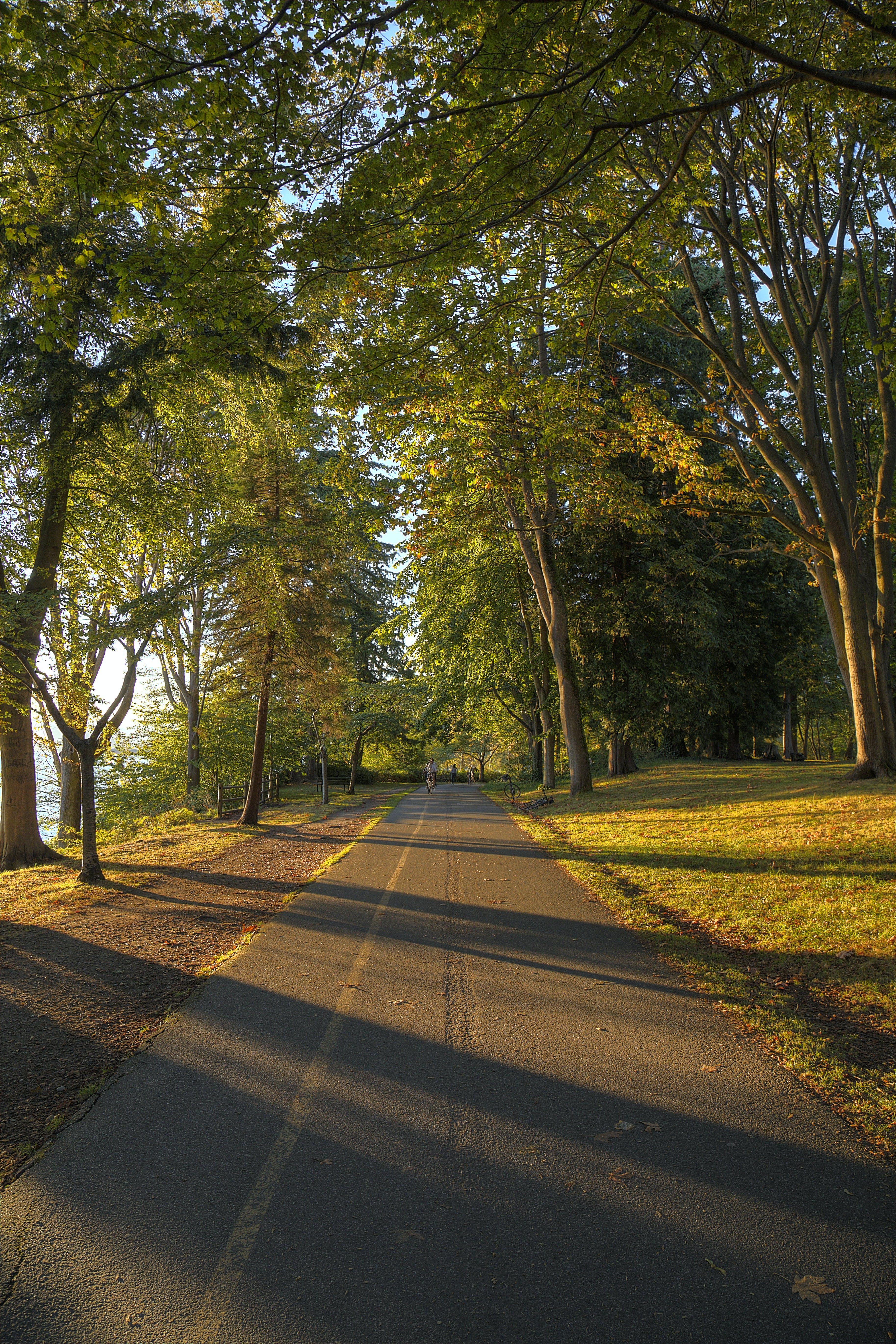 Kostenloses Stock Foto zu bäume, pfad, sonnenuntergang