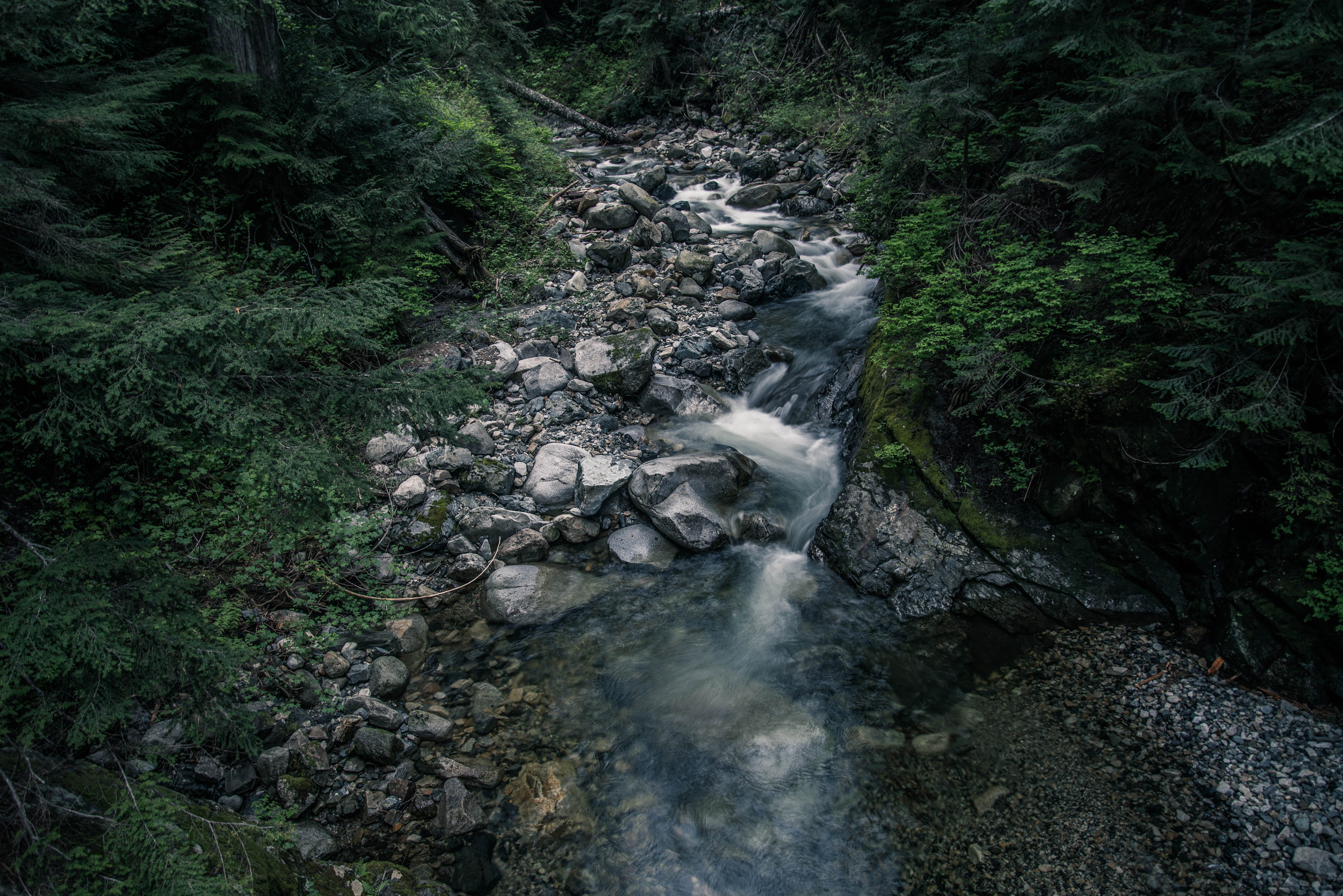 Free stock photo of nature, creek, stream, stones