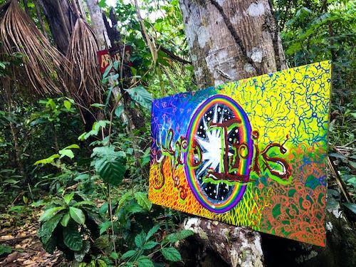 Free stock photo of amazon jungle, arco iris hippie community, ayahuasca
