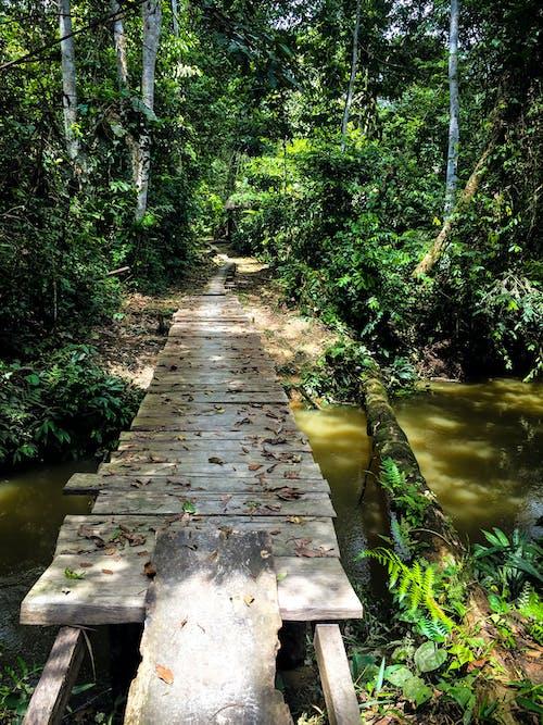 Free stock photo of amazon jungle, bridge in amazon jungle, centro das