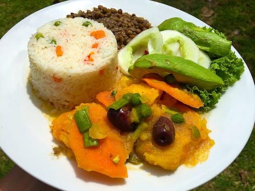 Free stock photo of ayahuasca diet, centro das, das ayahuasca healing center