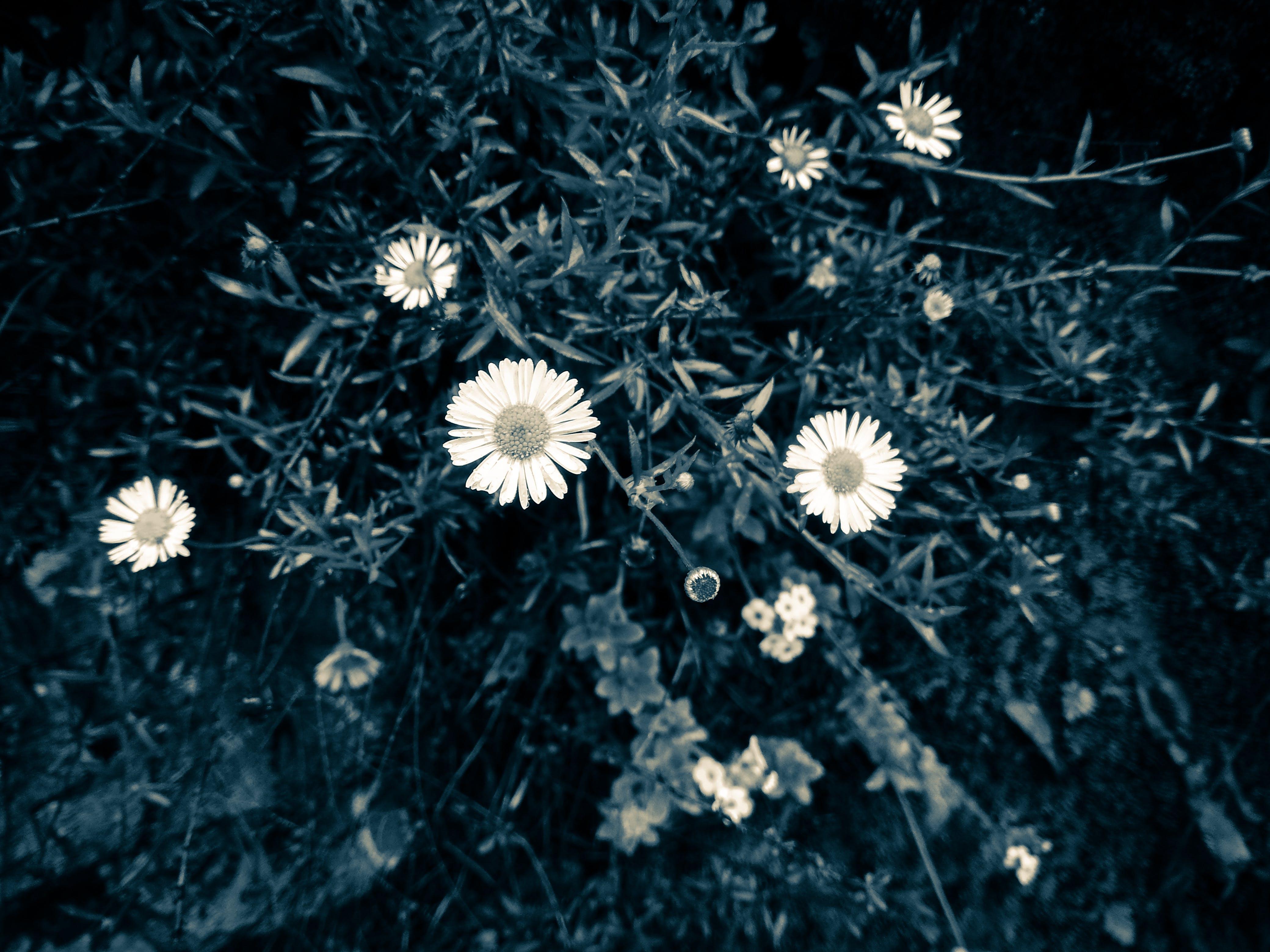 Free stock photo of beautiful flowers, blue flower, portrait