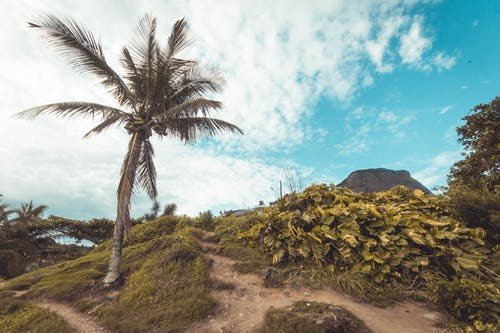 Free stock photo of barradatijuca, beach, brazil, coconut