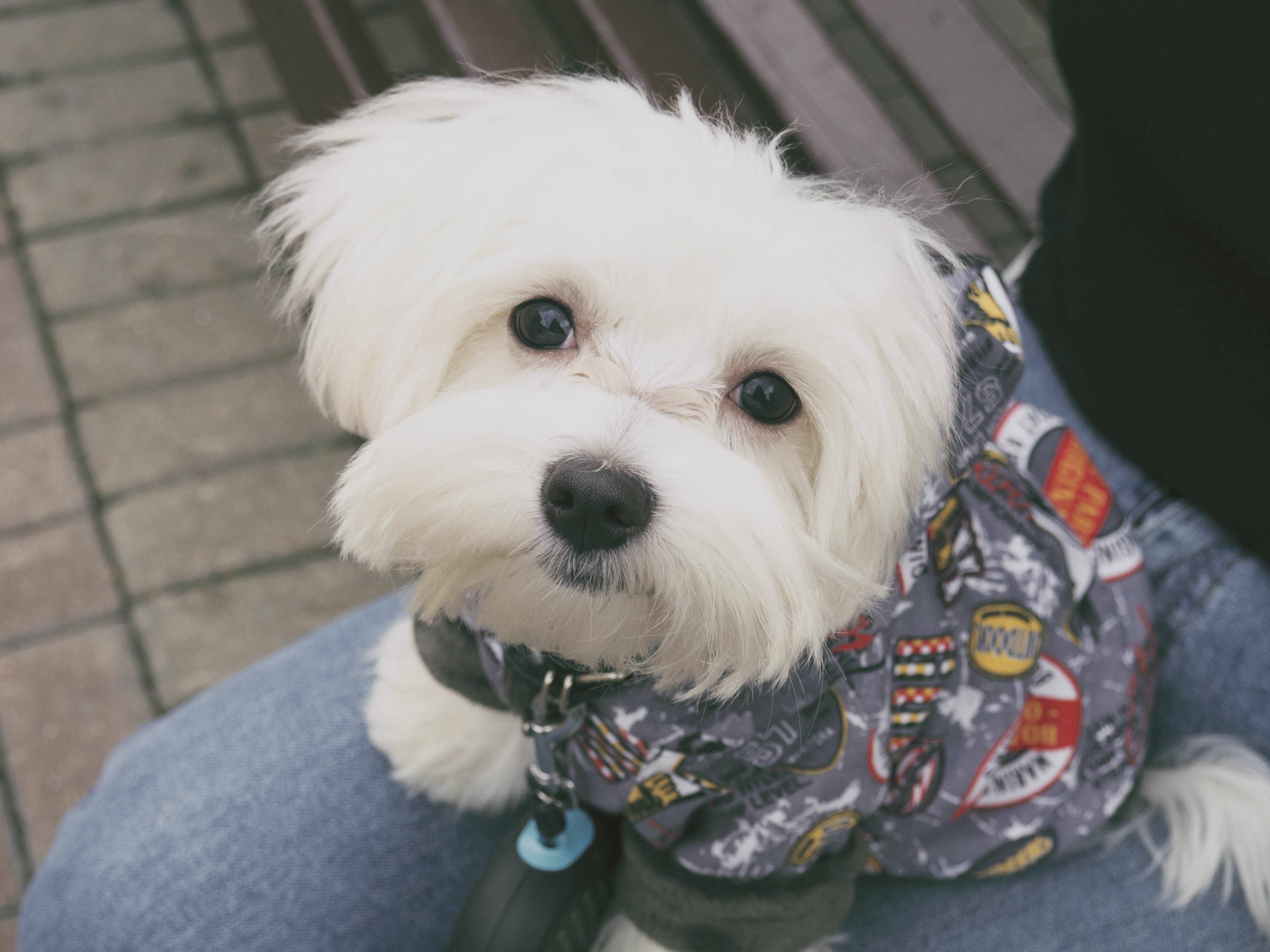 The 5 Must-Have Dog Accessories You Need This Season 4