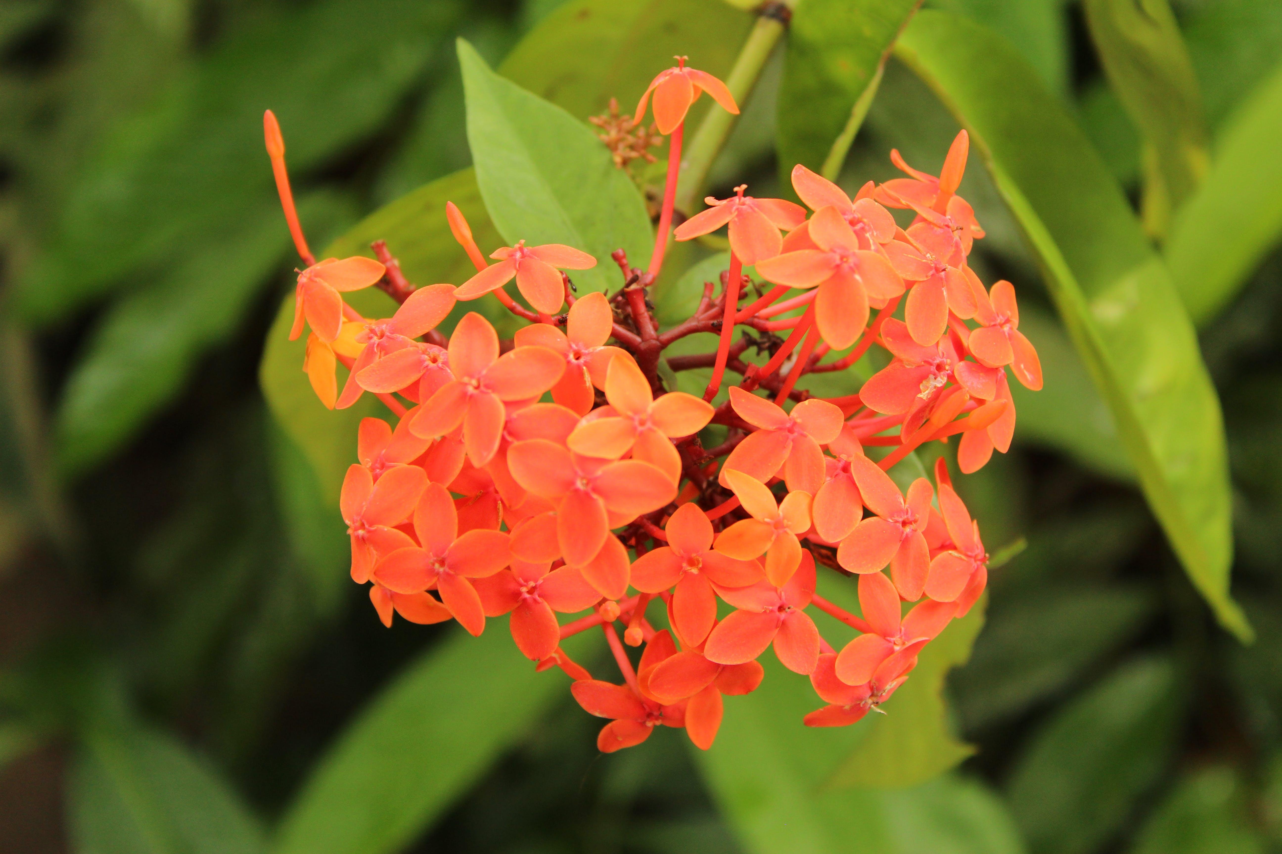 Free stock photo of beautiful flowers, flower garden, garden flower, green background