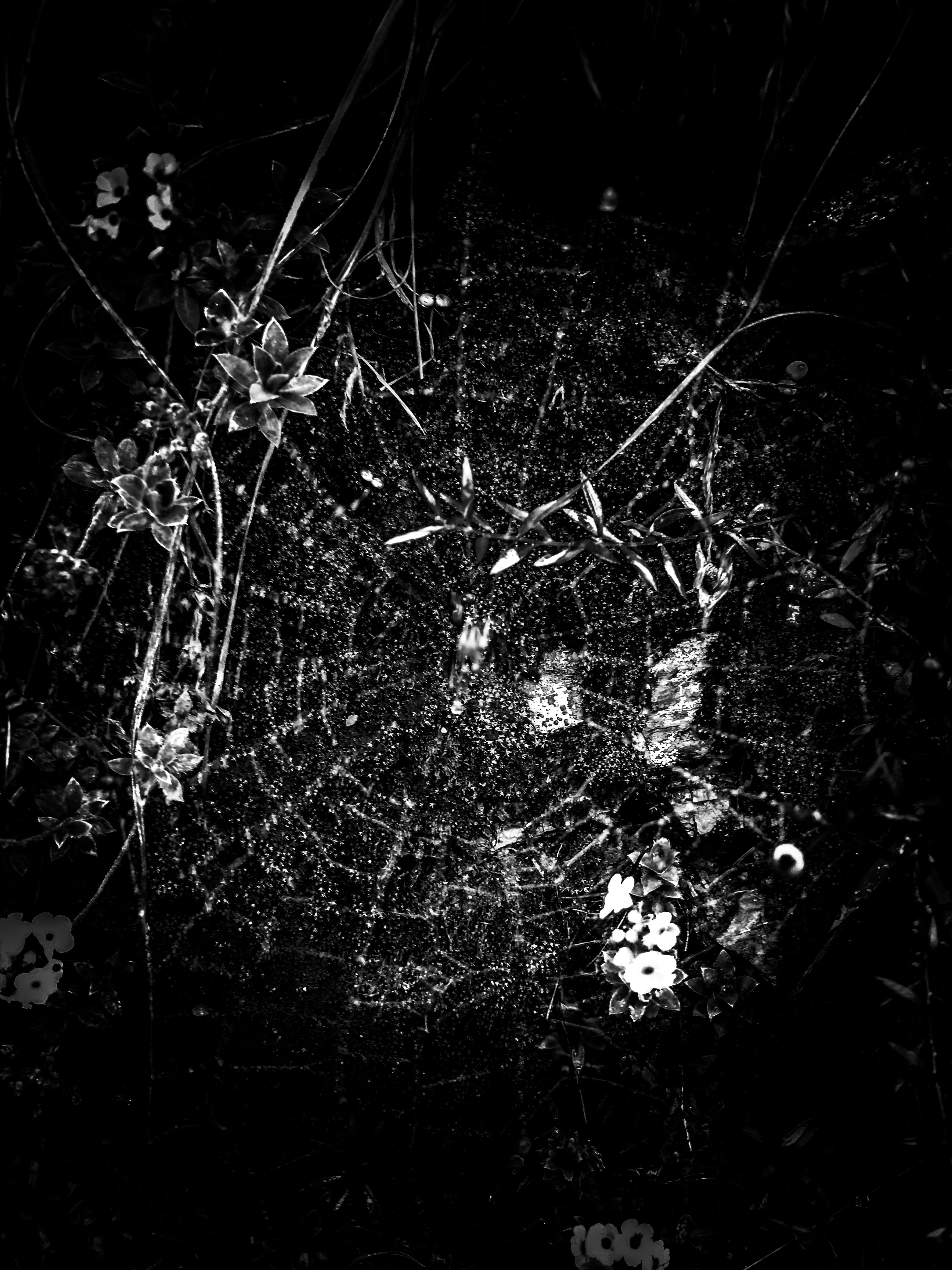 Free stock photo of bnw, spider web