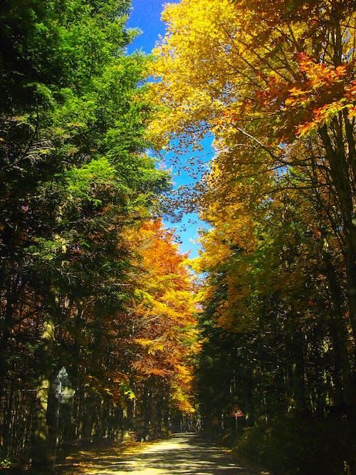 ağaçlar, çevre, düşmek, gün ışığı içeren Ücretsiz stok fotoğraf
