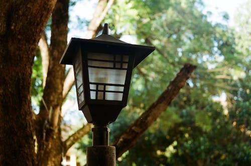 Ảnh lưu trữ miễn phí về ánh sáng, chén, công viên, kiến trúc