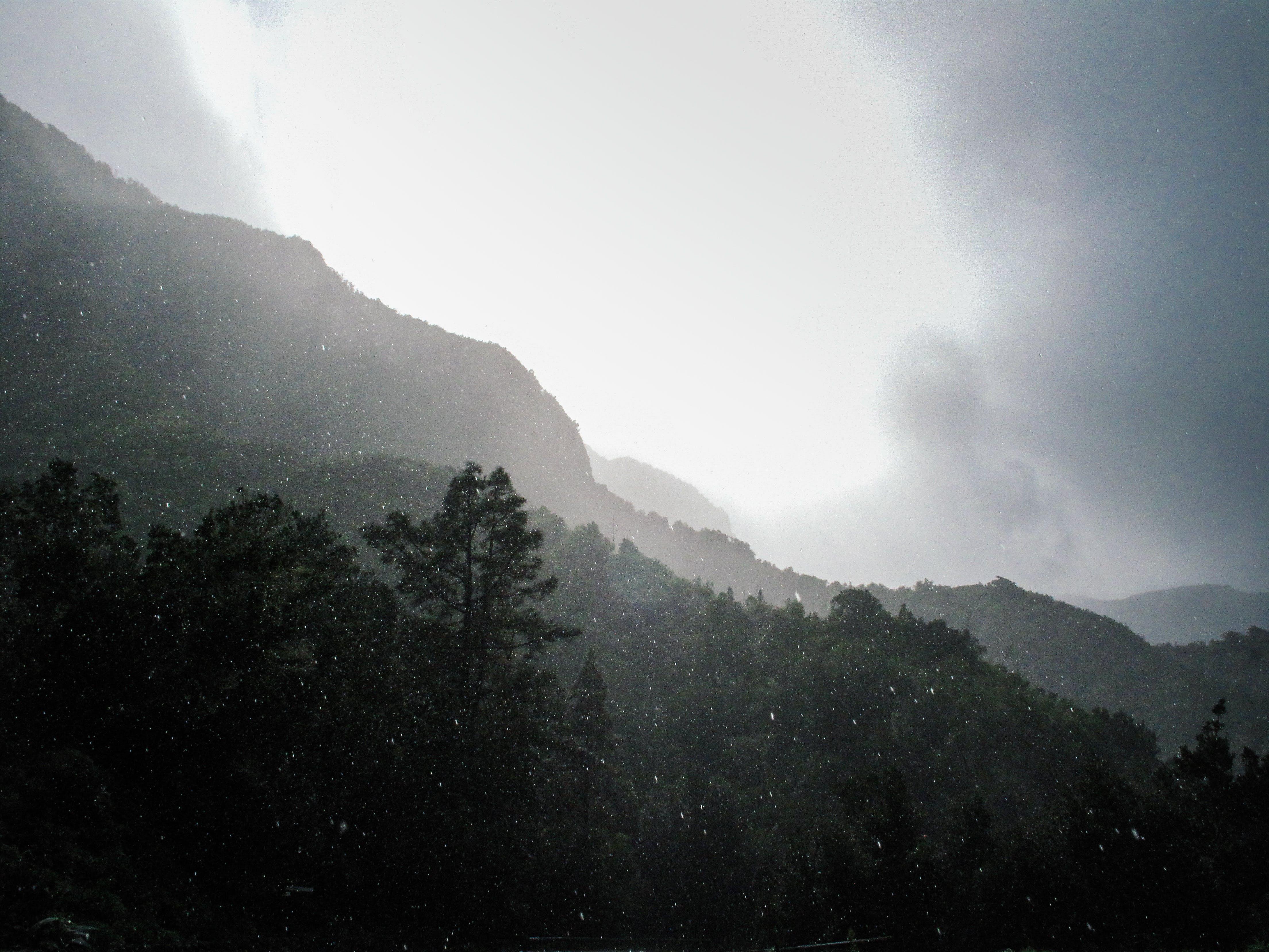 คลังภาพถ่ายฟรี ของ กลางวัน, ต้นไม้, ท้องฟ้า, ธรรมชาติ