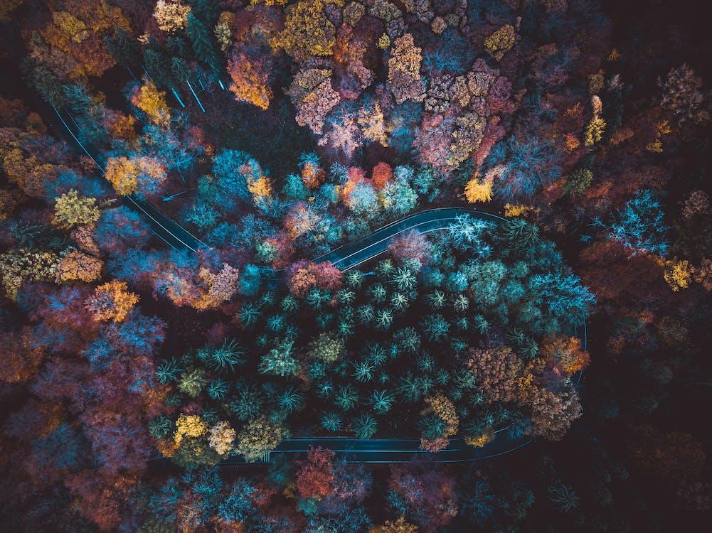 borovice, dálnice, dron skamerou