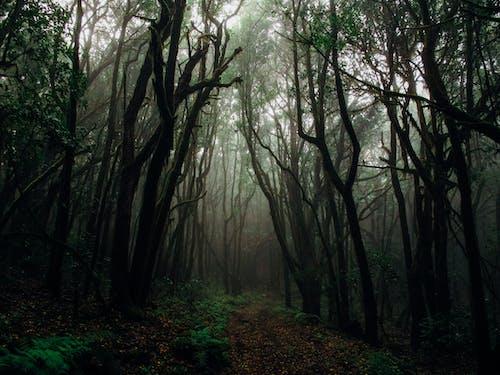 Foto stok gratis alam, batang, batang pohon, berkabut