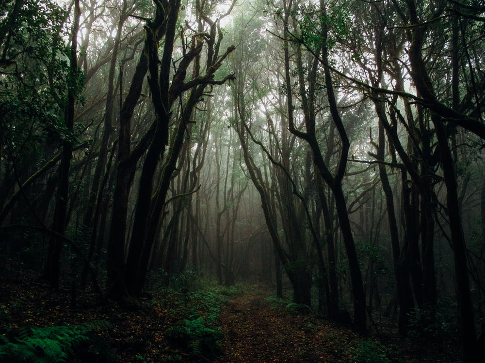 A forest with fog.  | Photo: Pexels
