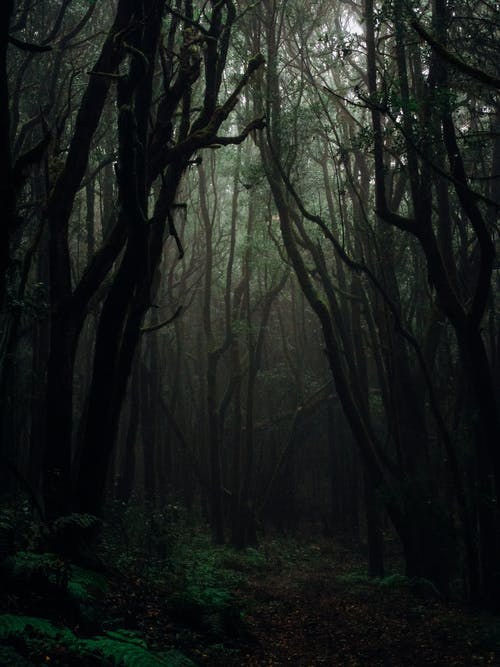 1000 Beautiful Dark Forest Photos Pexels Free Stock Photos We have 71+ amazing background pictures carefully well, adding a wallpaper to your desktop is not mandatory. beautiful dark forest photos pexels