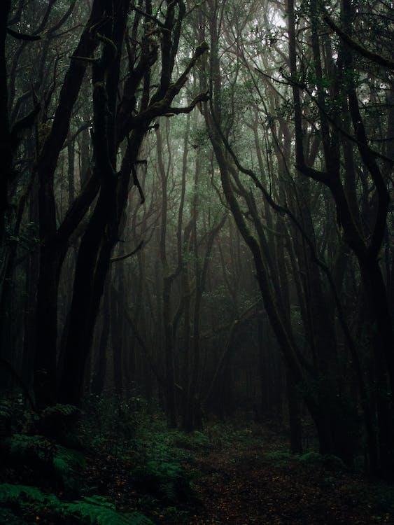 Kostnadsfri bild av dagsljus, dimma, dimmig