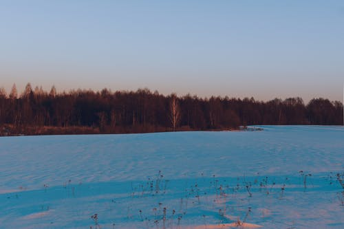 Immagine gratuita di alba, alberi, campo, foresta