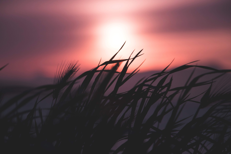 alan derinliği, arkadan aydınlatılmış, bulanıklık, çim içeren Ücretsiz stok fotoğraf
