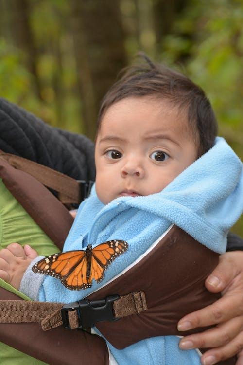 Gratis lagerfoto af baby, sommerfugl