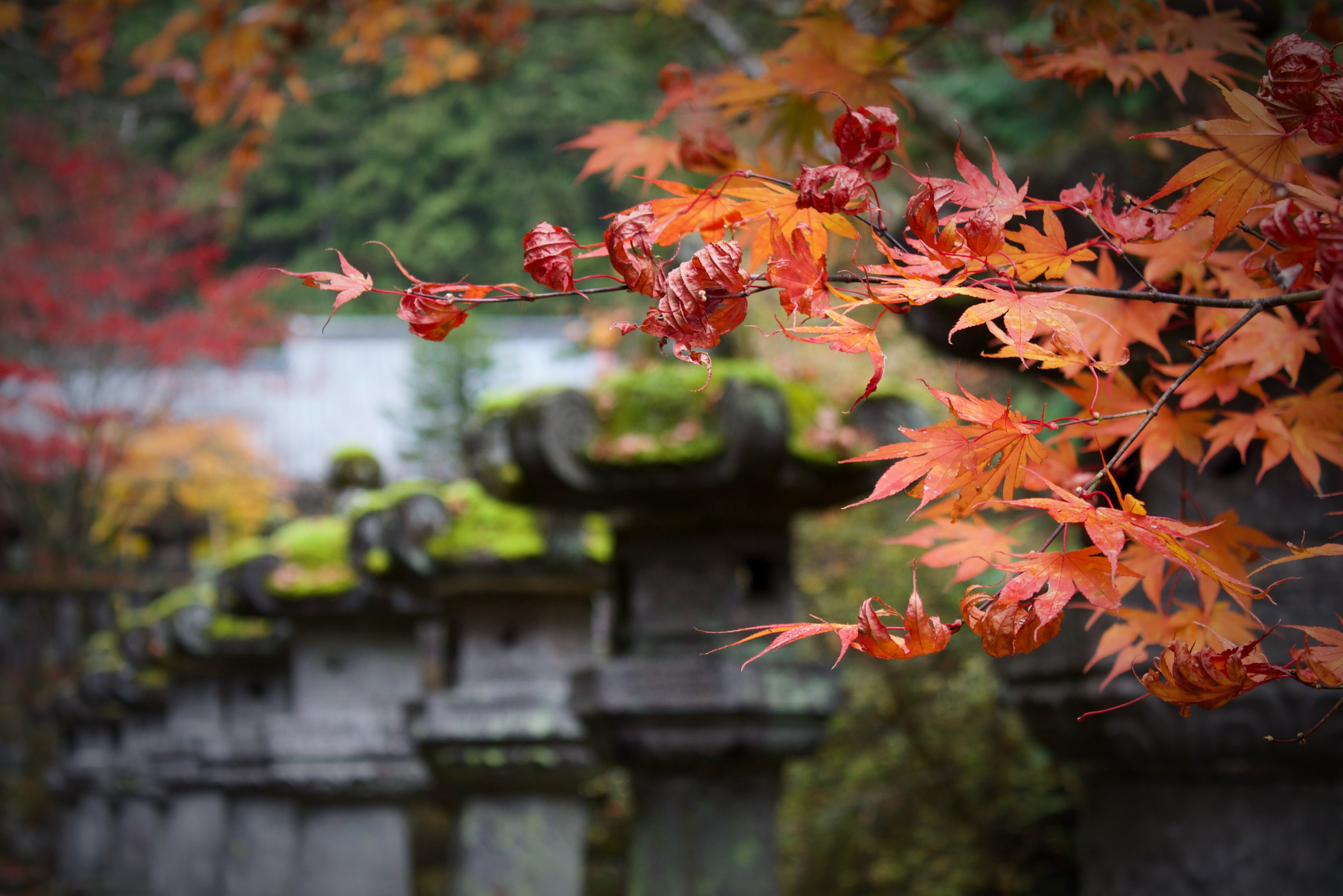 Free stock photo of #japan #autum #temple #leaves