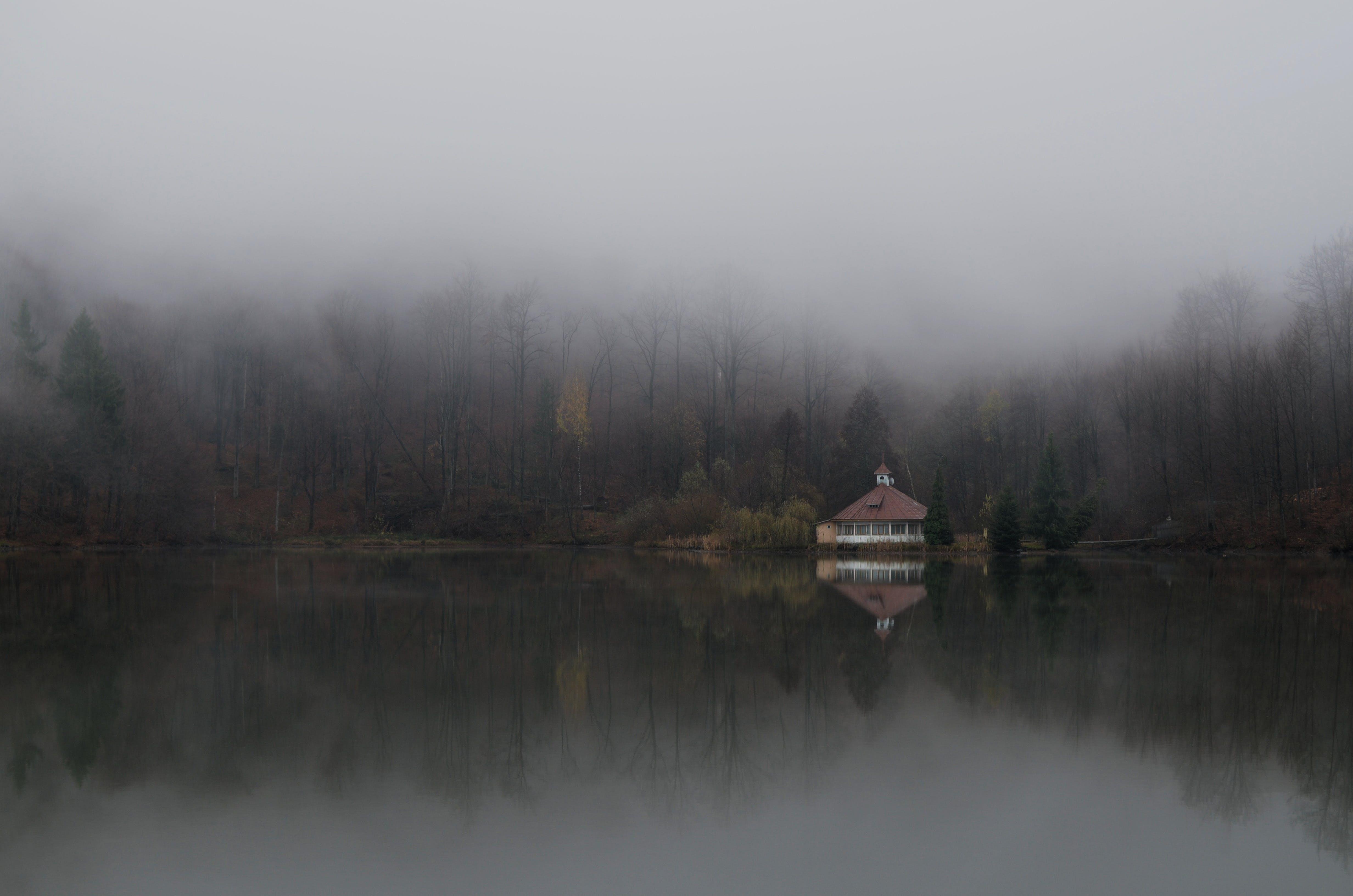 de cabana, enevoado, neblina, reflexão
