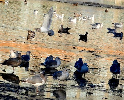Základová fotografie zdarma na téma ptáci létající orol úžasný