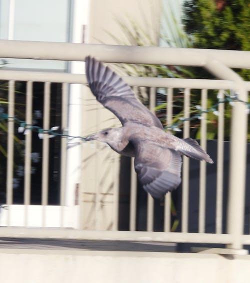 Základová fotografie zdarma na téma létající pták