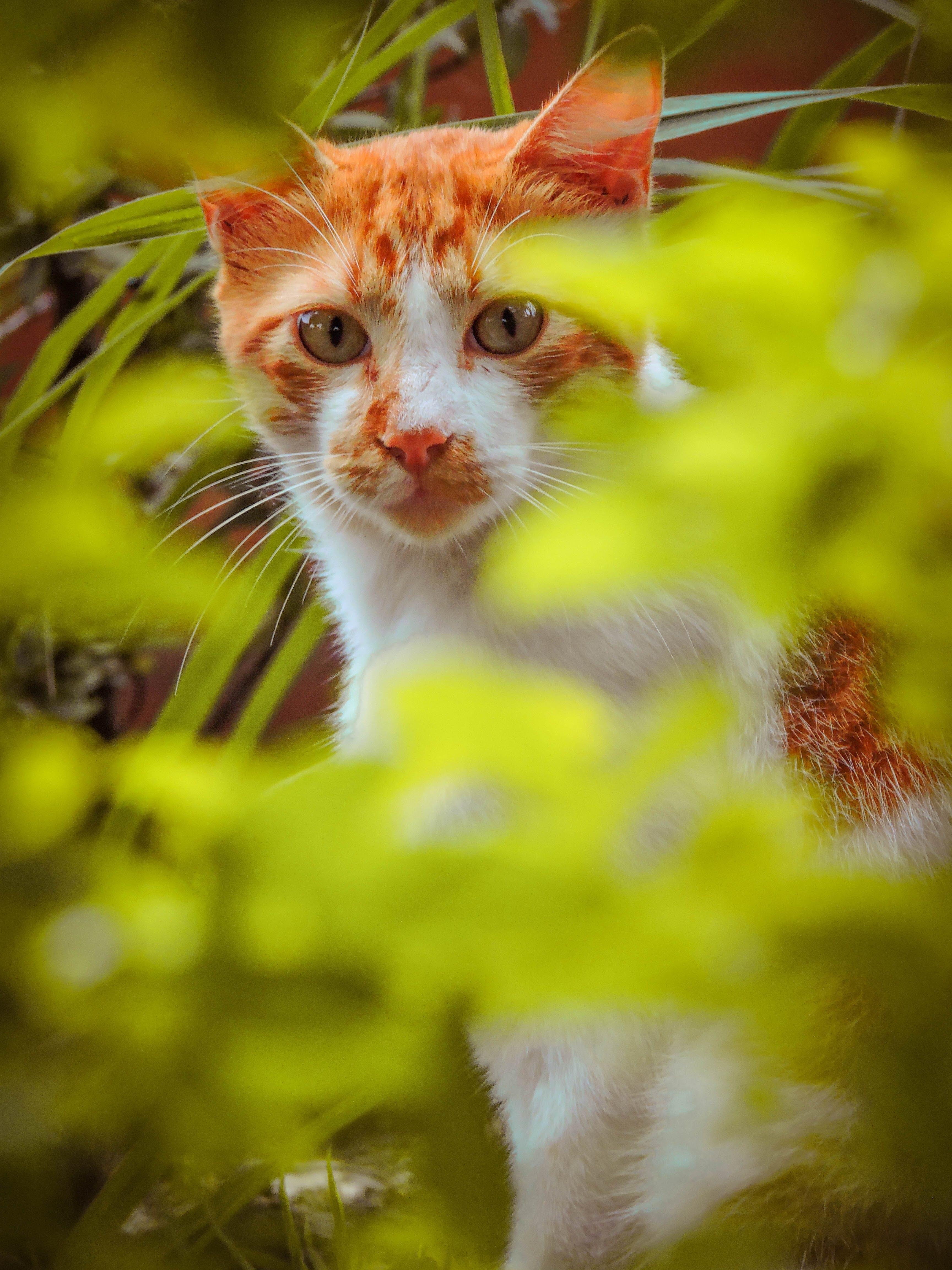 Gratis lagerfoto af close-up, dyr, farve, græs