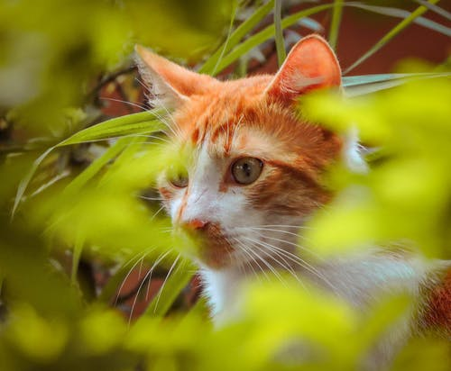 Photos gratuites de #animal de compagnie, #chat, #félin, animal