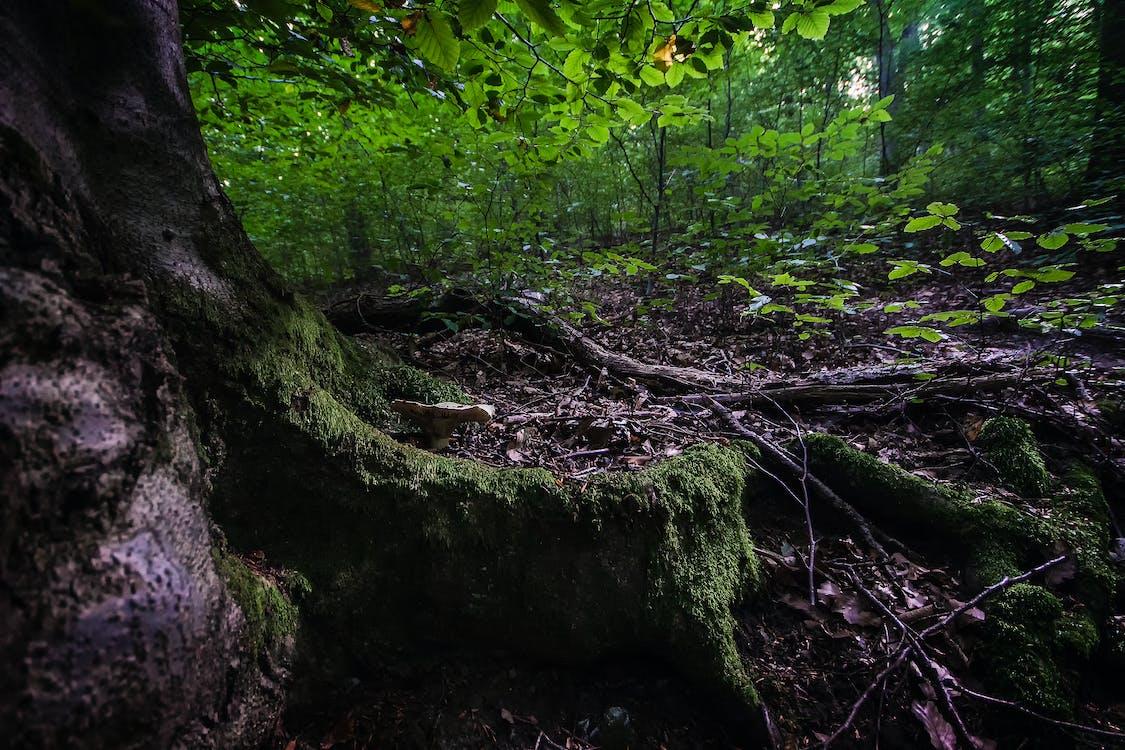 cây, gỗ, lá