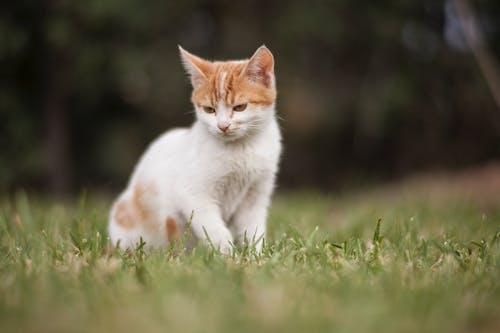 Gratis lagerfoto af dyr, græs, hvile, kæledyr