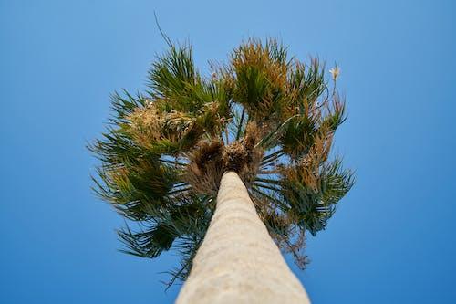 Fotos de stock gratuitas de árbol, foto de ángulo bajo, perspectiva, planta