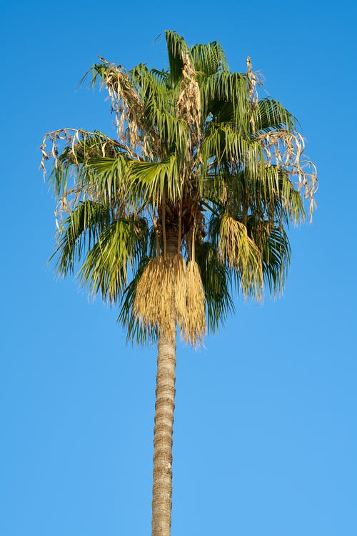 4k 桌面, 天性, 天空, 棕櫚樹葉 的 免费素材照片