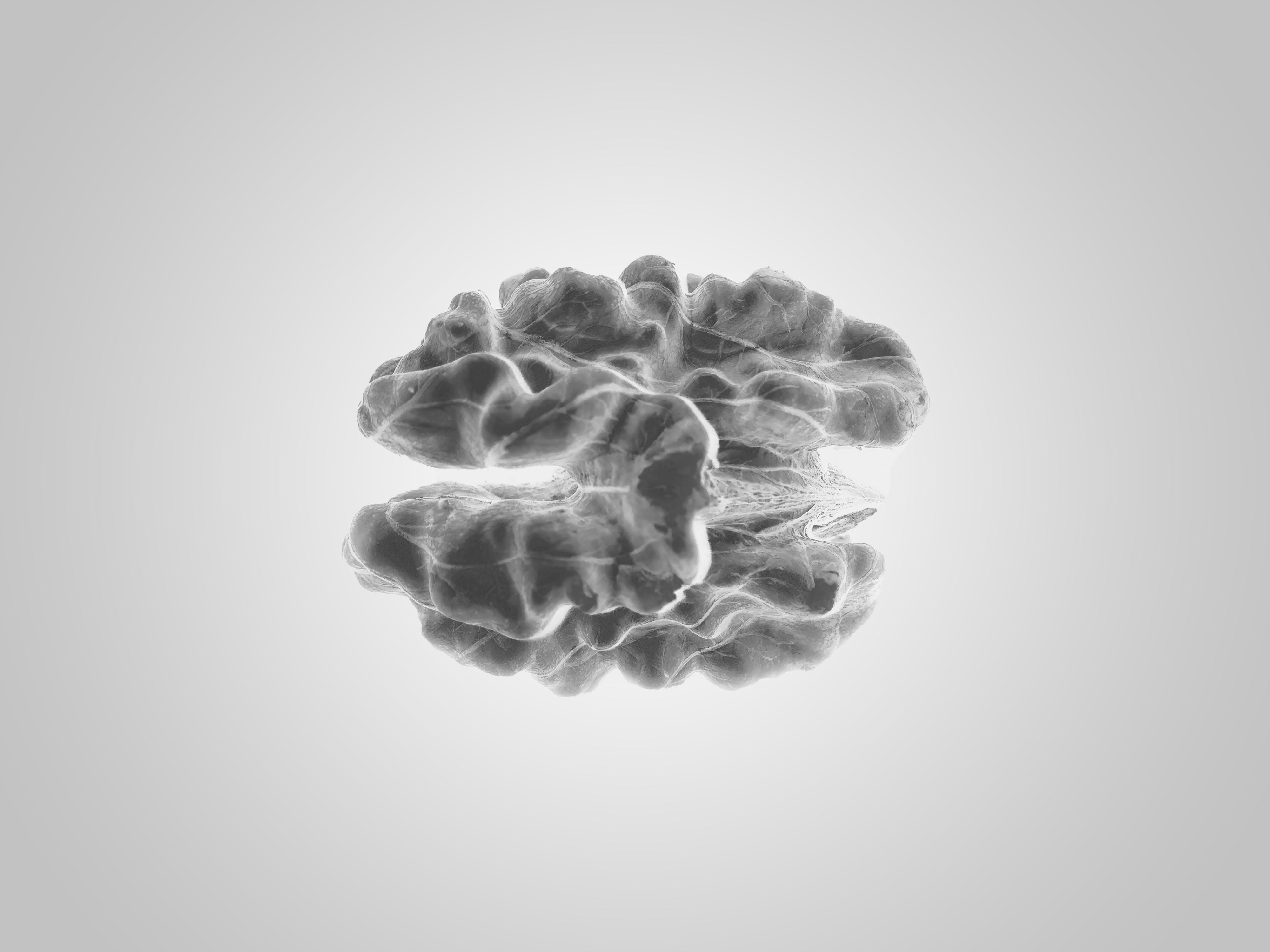 black and white, brain, close-up