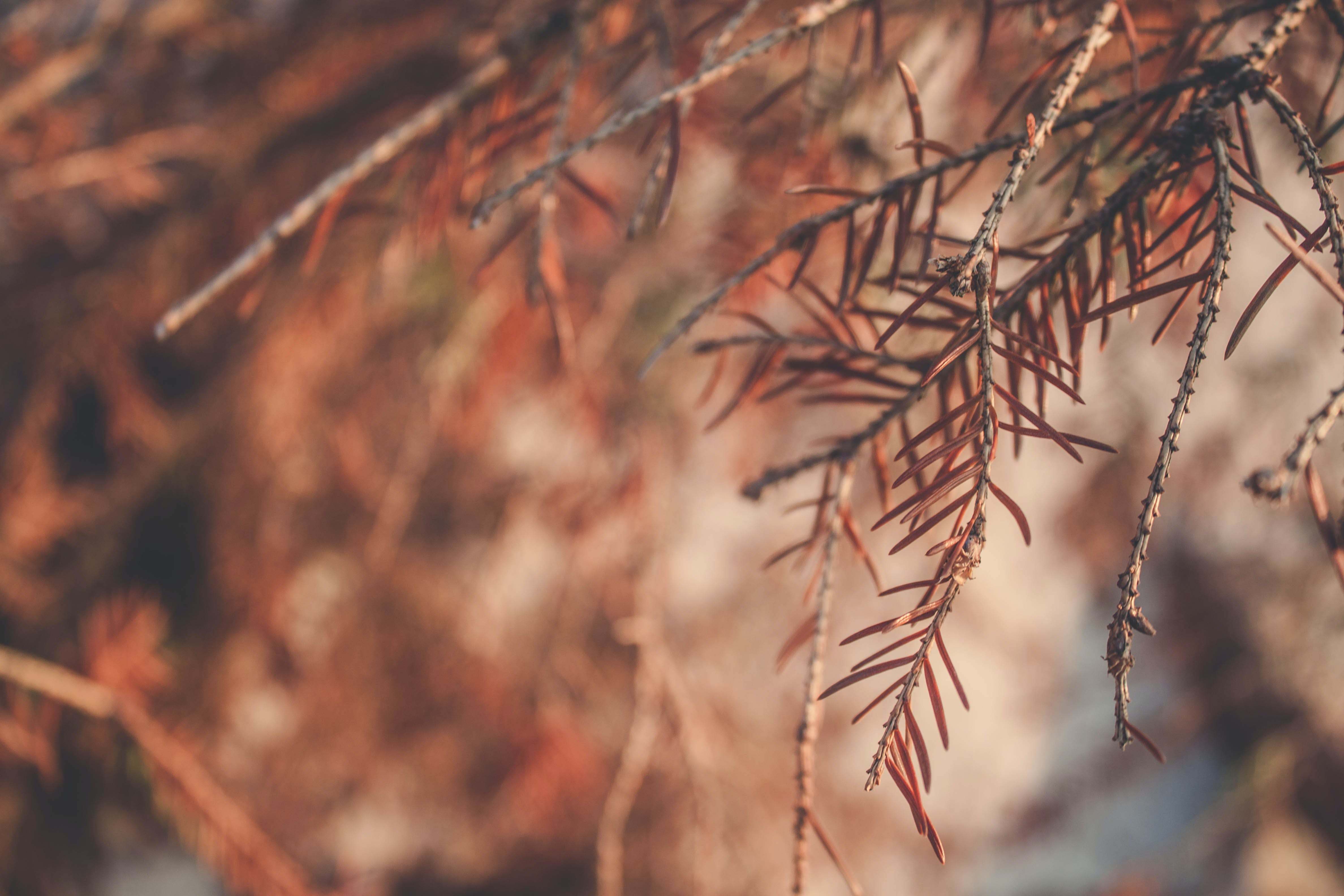 Selective Focus Photography of Brown Leaf